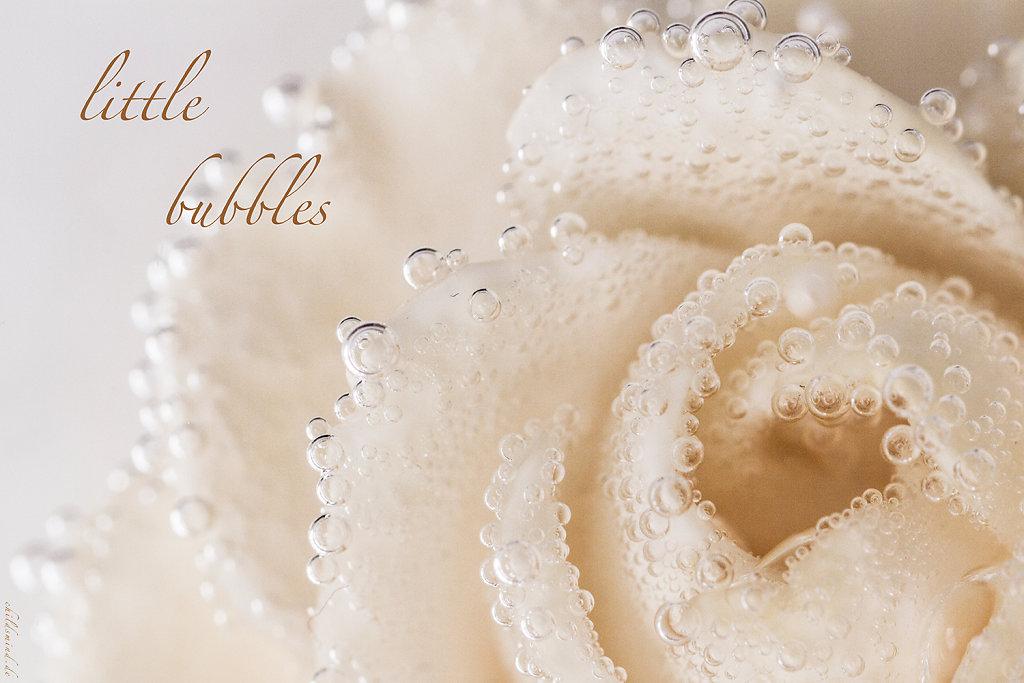 2014 - Bubbles