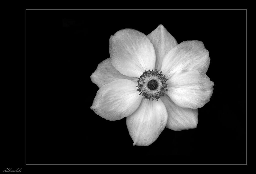 2009 - black & white flowers
